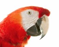 animal 019
