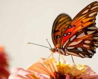 butterfly 006