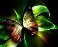 butterfly 007