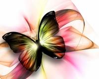 butterfly 008